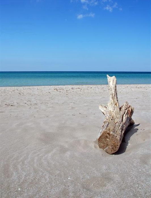 Красивые фото пляжа пляжная флора с