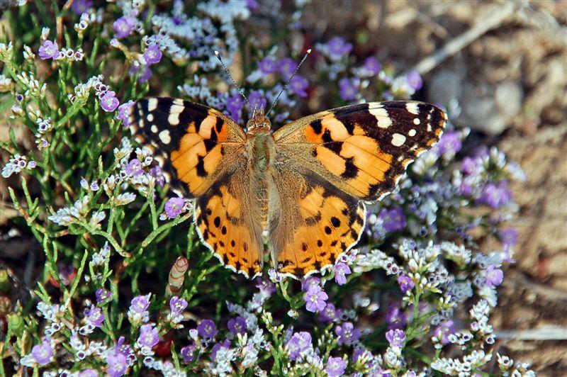 Фото животные фото животных крылья