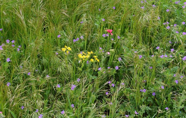 Фото цветы желтые полевые цветы к 8