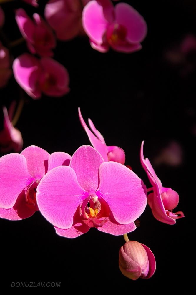 фея орхидеи фото на телефон нашем следующей
