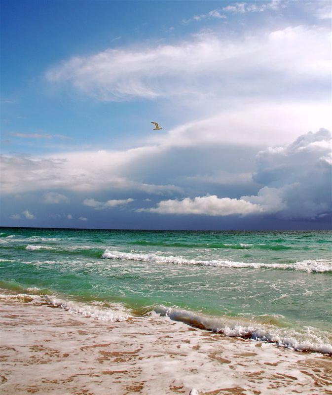 Картинки чайка на море