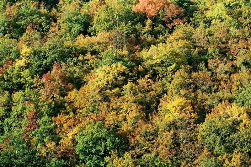 Фото природы на рабочий стол: Осенний лес, пейзаж: http://donuzlav.com/photo/photogal55.htm